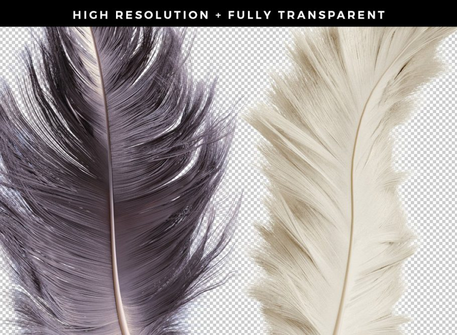 high-resolution-png-feathers- (1)